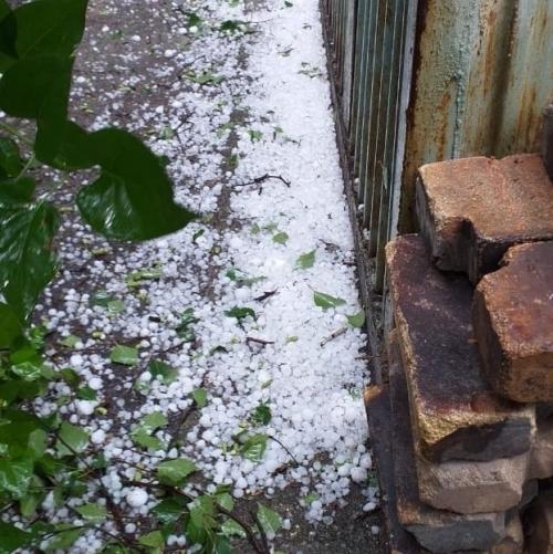 Размером с яйцо. В Сосновском районе град побил посадки в садах